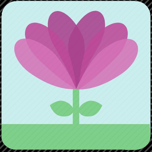 floral, flowers, garden flowers, garden plants, plants, purple flowers, violets icon