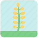flowers, garden, garden flowers, garden plants, leaves, yellow flower, yellow leaves icon