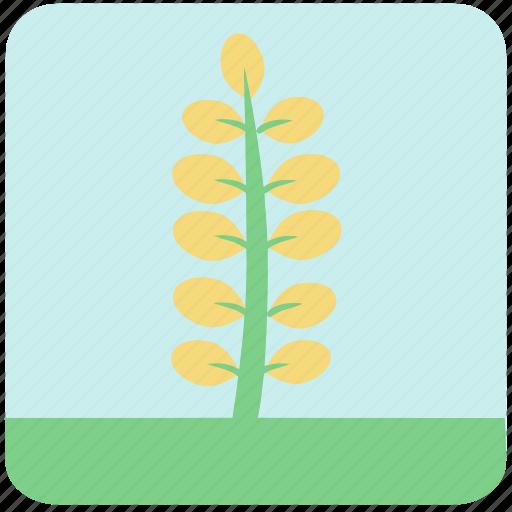 flowers, garden, garden flowers, garden plants, leaves, yellow flower, yellow leaves icon