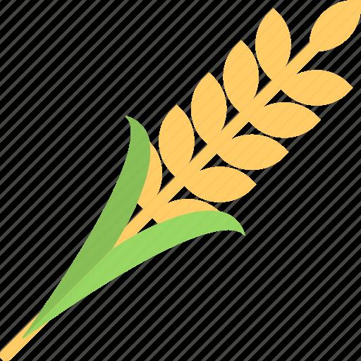 Food, cereal crop, ears of wheat, rye, barley icon