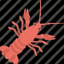 food, mud crab, sea creature, seafood