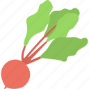 beet with leaves, beetroot, food, healthy diet, nutrition icon