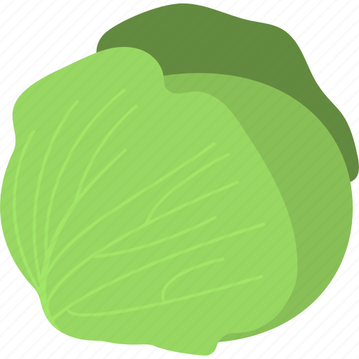 Vegetable, cabbage, organic food, salad, healthy diet icon