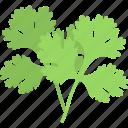 chinese parsley, cooking ingredient, coriandrum sativum, fresh coriander, pak chee icon