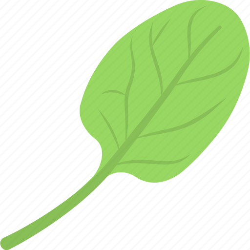 food, healthy diet, iron source, spinach leaves, vegetable icon