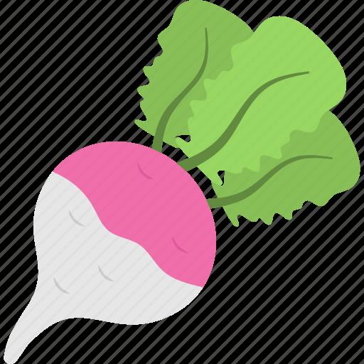 beetroot, food, healthy diet, root vegetable, turnip icon
