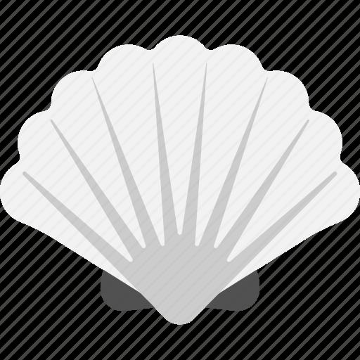 Seashell, precious, aquatic element, snail cover, pearl box icon - Download