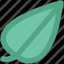 green, green leaf, green leafage, leaf, leafage, nature icon
