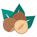 hazelnut, nuts icon
