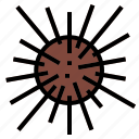 food, sea, urchin icon