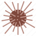 culinary, gourmet, urchin icon