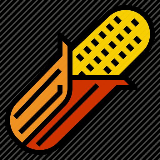corn, corns icon