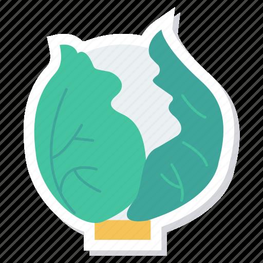cabbage, cauliflower, cooking, diet, food, healthyfood, vegetable icon