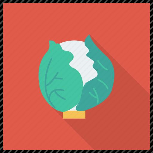 Cabbage, cauliflower, cooking, diet, food, healthyfood, vegetable icon - Download on Iconfinder