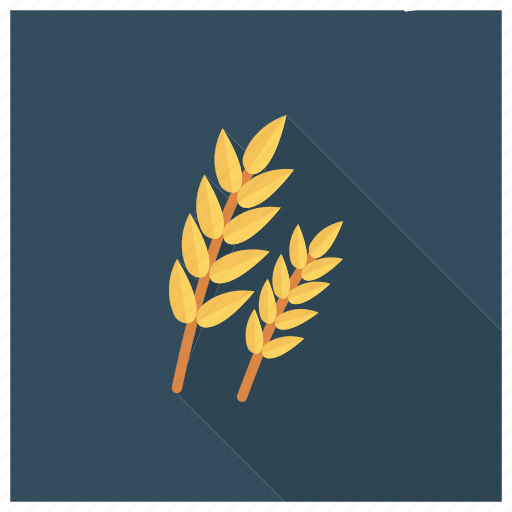 Wheat, nature, food, flour, healthy, grain, breakfast icon