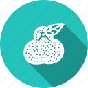 amrood, food, fresh, fruit, guava, helthy, kitchen icon