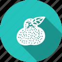 amrood, food, fresh, fruit, guava, helthy, kitchen