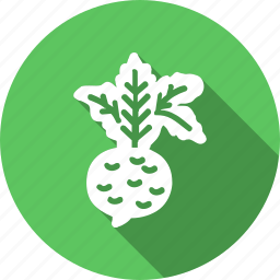 beet, food, healthy, kitchen, radish, root, vegetable icon