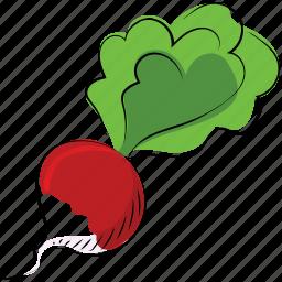 beetroot, beets, garden beet, healthy diet, red beet, table beet icon