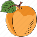 diet, fruit, health diet, orange, organic, peach, prunus persica icon
