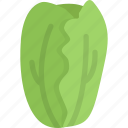 cabbage, cooking, food, product, shop, supermarket, vegetable icon