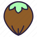 cake, eat, food, hazel, hazelnut, nut, nuts icon