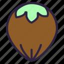 food, hazel, hazelnut, nut, nuts icon