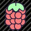 berry, food, fruit, raspberries, raspberry, razz icon