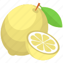 citrus fruit, food, fruit, lemon, lemon slice icon