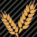 crop, grain, wheat, wheat crop, wheat grain