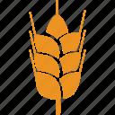cereal grain, grain, wheat, food