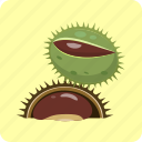 barb, chestnut, crust, husk, nut, seeds, vegetable icon