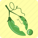 agriculture, bean, food, leguminous, organic, pod, vegetable icon