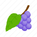 berry, fruit, grape, healthy, isometric, ripe, vine icon