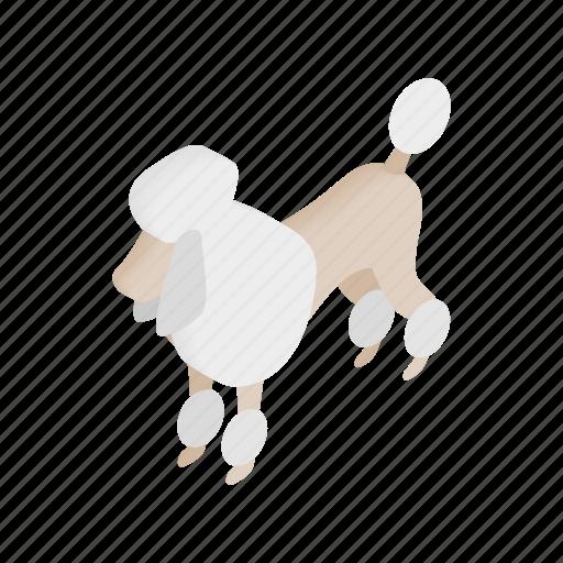 animal, canine, dog, french, isometric, pet, poodle icon