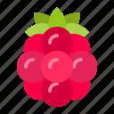 food, fruit, healthty, raspberry, vitamin icon
