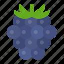 blackberry, food, fruit, healthty, vitamin icon