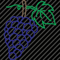 grape, grapes, grapevine, red grape, vines, vineyard, wine icon
