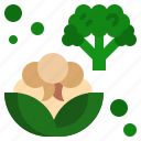 cauliflower, food, fruit, organic, vegan icon