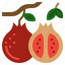 food, fruit, organic, pomegranate, vegan icon
