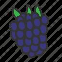 fresh, fruit, raspberry, sweet icon