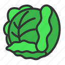 cabbage, cooking, food, organic, vegetable icon