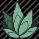 cactus, leaf, nature, botany, plant, agave icon