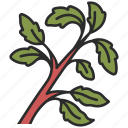 basil, spice, herb, organic, fresh, vegetarian icon