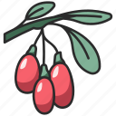 goji, healthy, wolfberry, food, fruit, berry icon