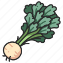 root, celery, celeriac, healthy, organic, vegetable, fresh icon