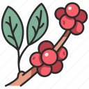 plant, organic, arabica, coffee, coffea, fruit icon