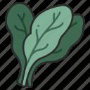 leaf, diet, healthy, food, vegetable, spinach, salad