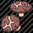 mushroom, healthy, food, fresh, shitake, shiitake icon