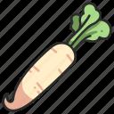 radish, plant, healthy, organic, vegetable, fresh, vegetarian